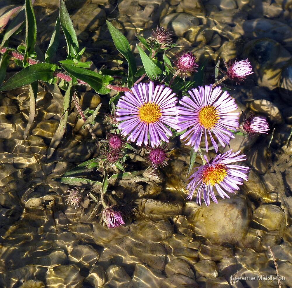 purple flowers by Leeanne Middleton