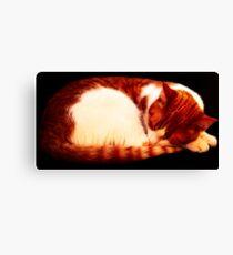 Warm Sleeping Kitten Curled Up Canvas Print