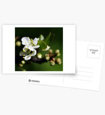 Blossoming Postcards