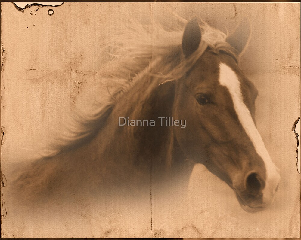 Visions  by Dianna Tilley