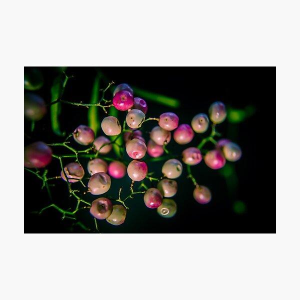 Bright Peppercorn Photographic Print