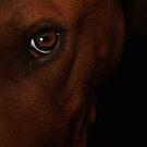 Dog portrait by Erika Gouws