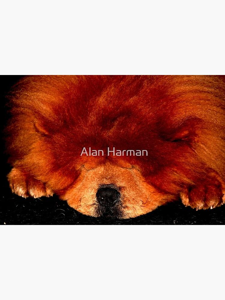 Sleeping Chow Chow by AlanHarman