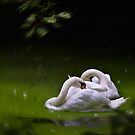 Swan Lake by Geoff Carpenter