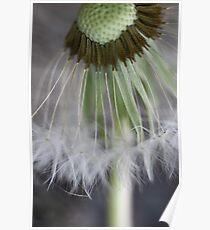 Dandelion Details Poster