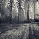 Mount Saint Leonard, Toolangi, Victoria by Andrew Bradsworth