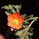 Wildflower by Zeanana