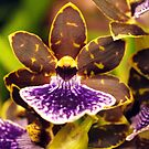 Orchid, yellow, brown, mauve  by Bev Pascoe
