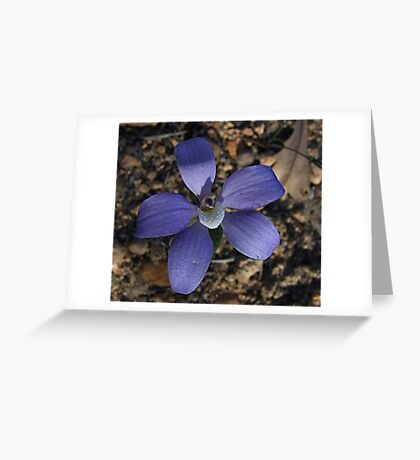 Blue china Orchid Greeting Card