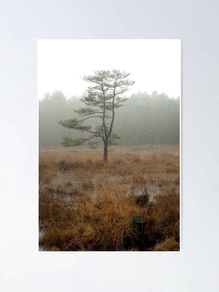 Alternate view of Silent tree in misty land Poster