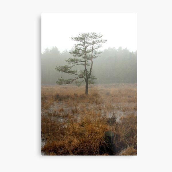 Silent tree in misty land Metal Print