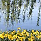 Flowers by Kamran Baig