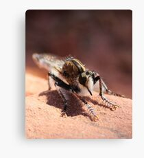 Unknown Critter / Insect Canvas Print
