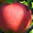 The red apple by Maria1606