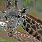 Talking Giraffe by Jeff  Burns