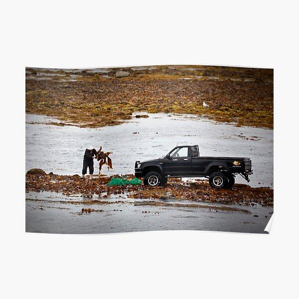 Kelp Harvesting on Inish Mor Poster