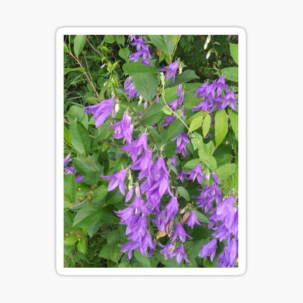 Pretty Purple Sticker