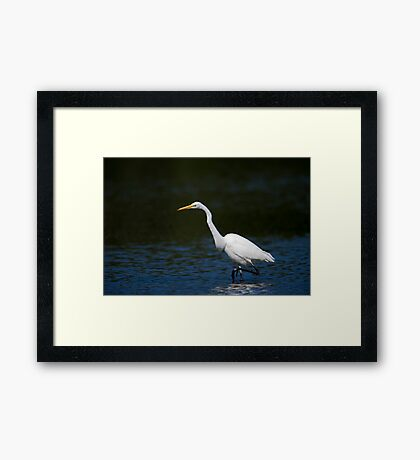 A walkabout Framed Print