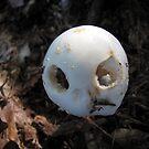 Alien Mushroom by Rusty Katchmer