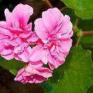 I love Spring!!! by Anna D'Accione