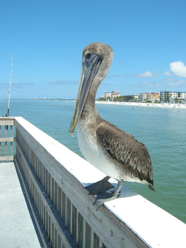 Just Hanging on Ft Myers Beach  by John  Kapusta