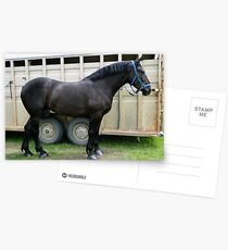 Percheron Perfection Postcards