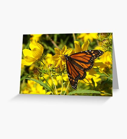 Monarch's Gold 2 Greeting Card