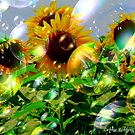 Bubbly Make A Wish Sunflowers by Debbie Robbins