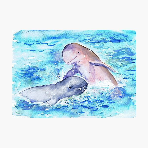 Postcards for the Reef 15: Snubfin Dolphin Photographic Print
