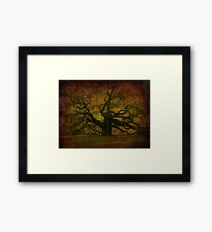 The Angel Oak in Charleston SC Framed Print