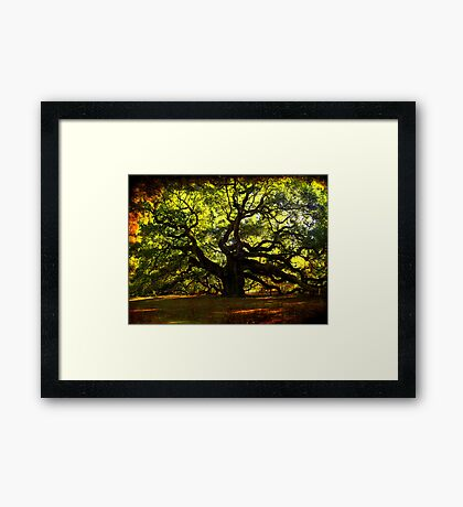 The famous Angel Oak Tree Framed Print