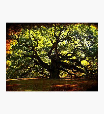The famous Angel Oak Tree Photographic Print