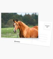 Hello Stranger Postcards