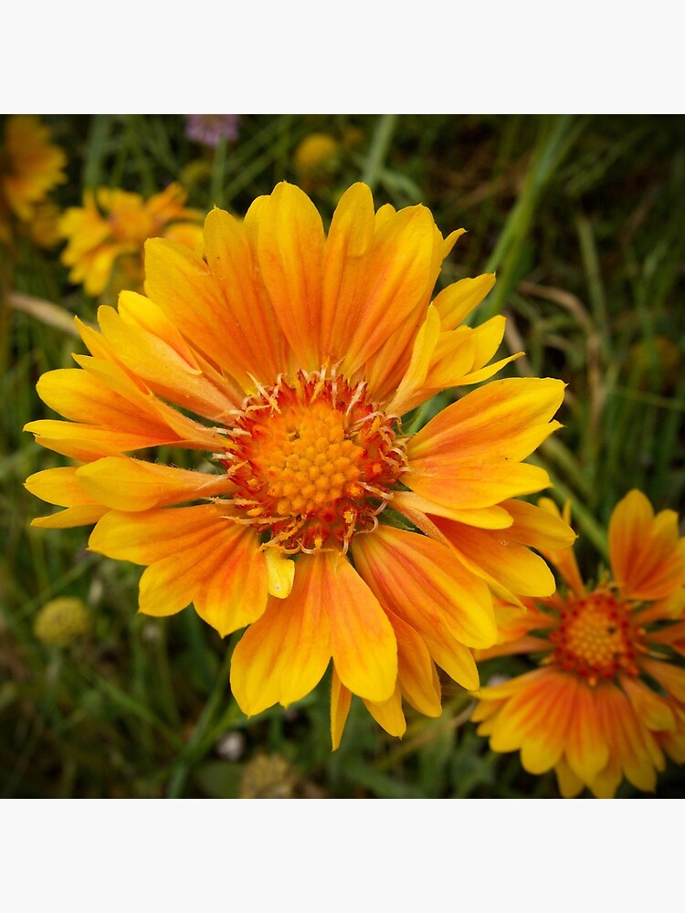Shining Bright from A Gardener's Notebook by douglasewelch