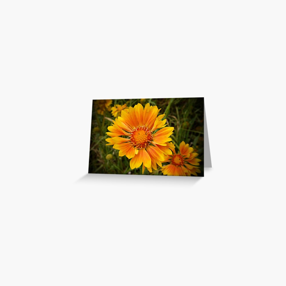 Shining Bright from A Gardener's Notebook Greeting Card