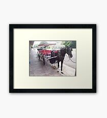 Natchez Carriage Rides - Natchez, Mississippi Framed Print