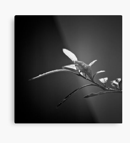 Searching  Metal Print