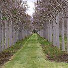 Tree Line by Stecar