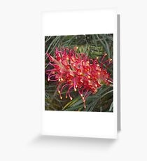 A beautiful red/pink large Grevillea Greeting Card