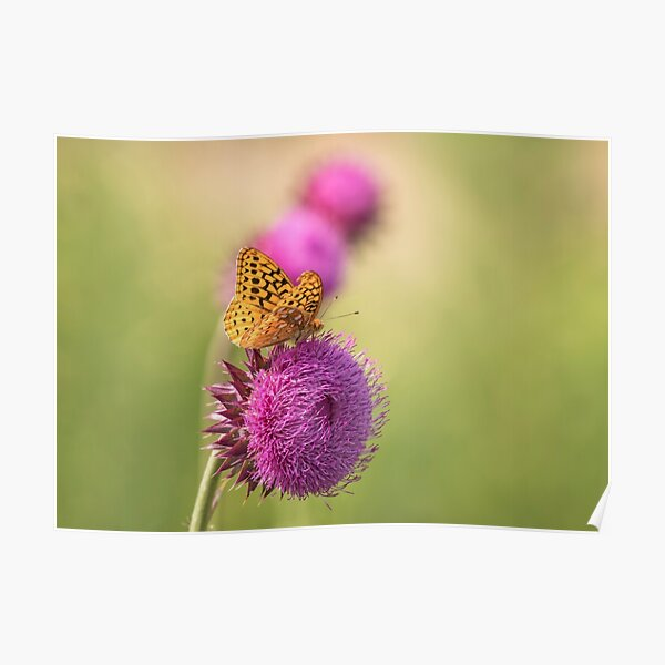 The Great Spangled Fritillary Poster