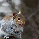 Hungry Squirrel by Elaine123