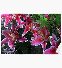 """Oriental Lilies...."" Poster"