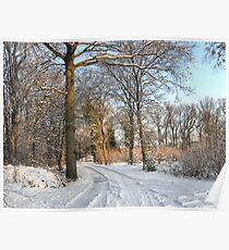 Winter Sunshine Poster
