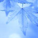 Blue Leaf by Stephanie Hillson