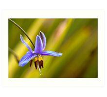 Small Flower - Geelong Art Print