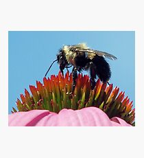 """gathering pollen"" Photographic Print"