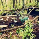 You can find beauty in rust.... by DDLeach