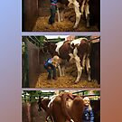 The girl and the cow - triptych 1 by steppeland