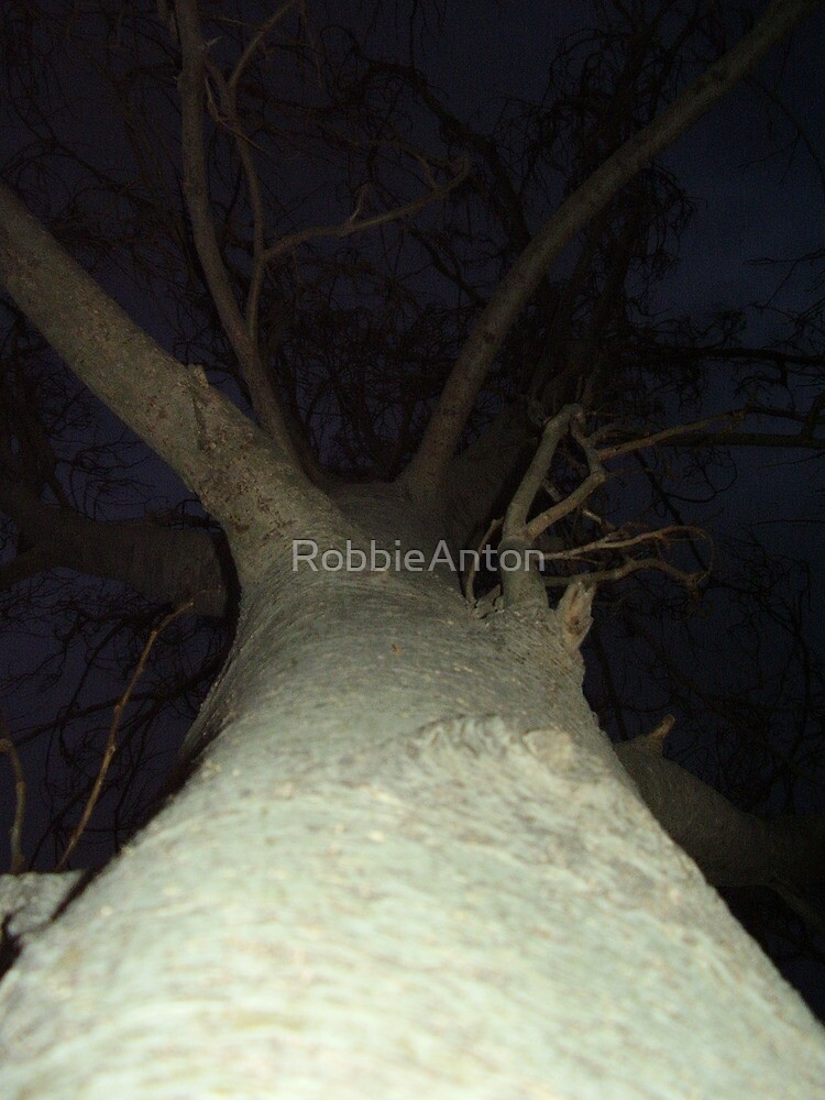 Witch Tree at Night by RobbieAnton