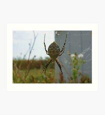 My Garden Spider Art Print